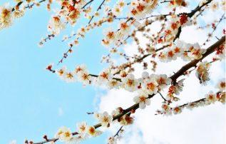 せいぶれいえんコラム 第42回「春のお彼岸、ぼたもち」