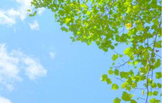 せいぶれいえんコラム 第57回「樹木葬について」