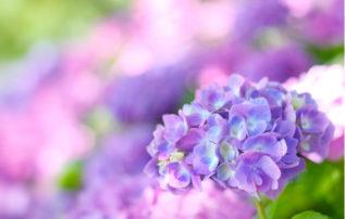 せいぶれいえんコラム 第58回「造花による仏花について」